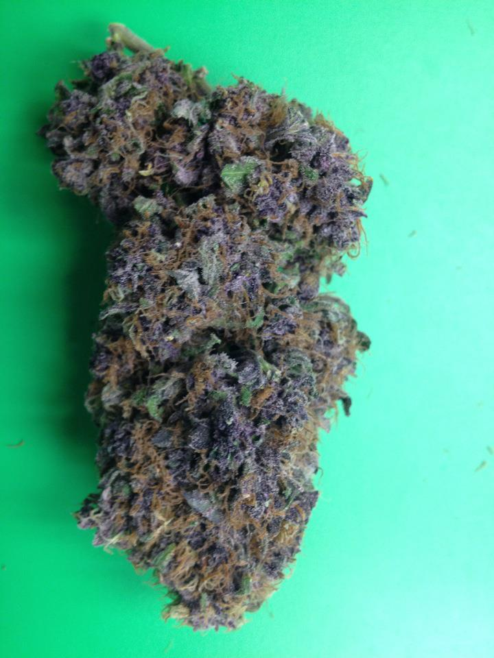 Mendocino Purple